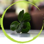 http://www.dreamstime.com/royalty-free-stock-photos-environmental-icon-image8727598